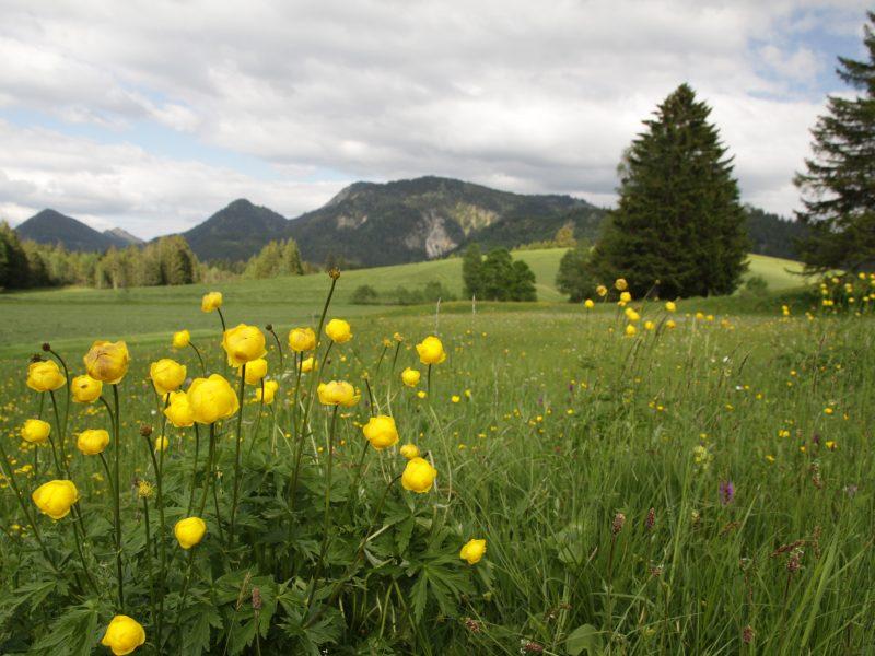 Berghotel Mühle Blumen-Wiese